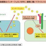 ウイルス感染が原因の1型糖尿病 原因遺伝子を世界ではじめて発見  九州大学